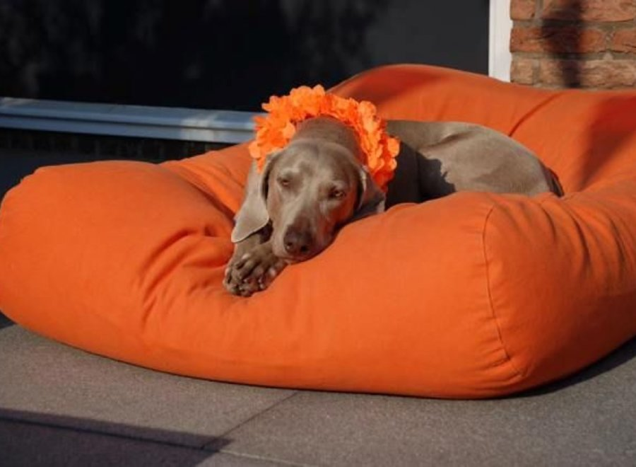 Hundebett Orange Medium
