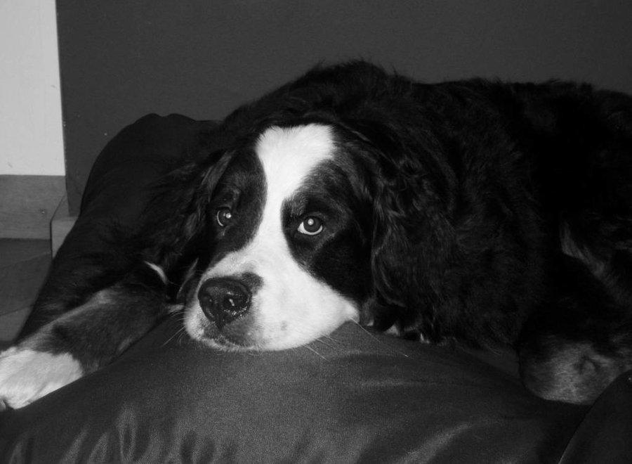 Hundebett Schwarz (Beschichtet) Large