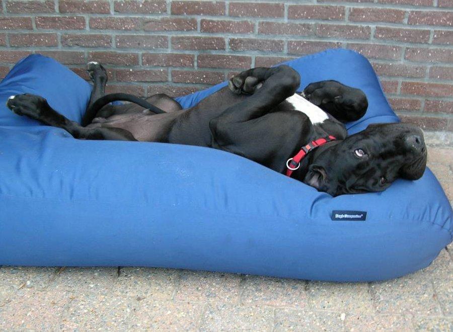 Hundebett Kobaltblau (Beschichtet) Superlarge