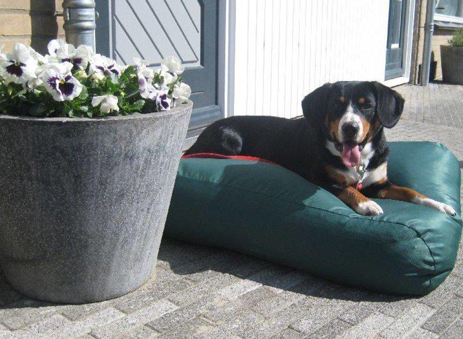 Hundebett Grün (Beschichtet) Small