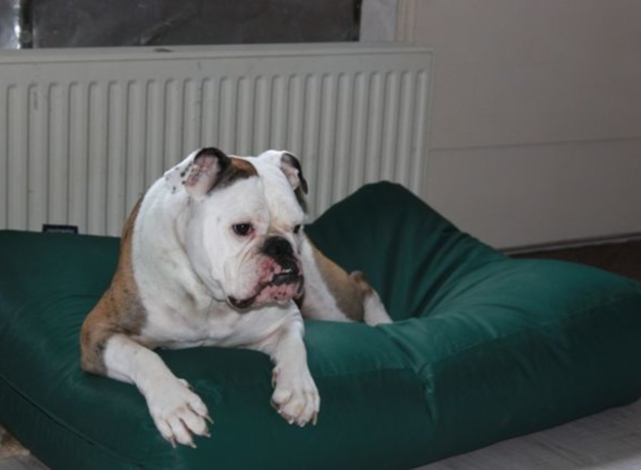 Hundebett Grün (Beschichtet) Large