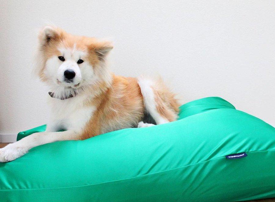 Hundebett Frühlingsgrün (Beschichtet) Small