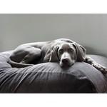 Dog's Companion® Hundebett Mausgrau (Cord) Medium