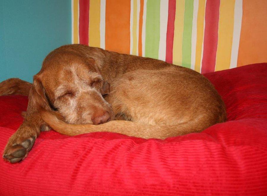Hundebett Rot (Cord) Superlarge