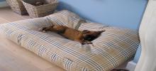 Hundebetten von Dog's Companion®