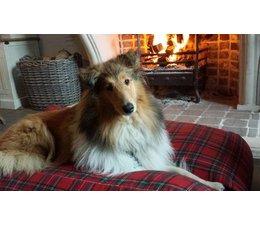Dog's Companion® Dog bed Royal Stewart