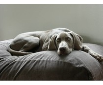 Dog's Companion® Dog bed Mouse Grey (Corduroy)