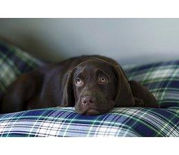Dog's Companion® Dog bed Dress Gordon