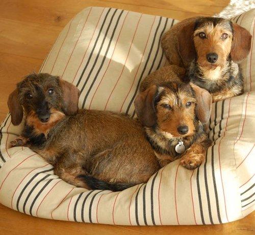Dog's Companion® Hundebett Country Field (Gestreift)