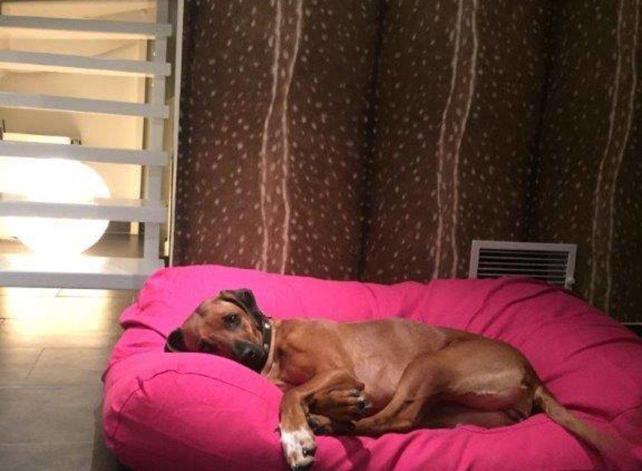 Hundebett Rosa
