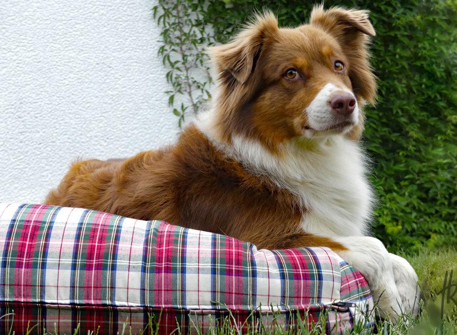 Hundebett Dress Stewart