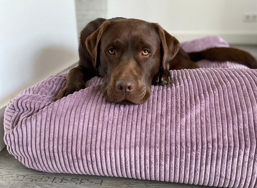 Hundebett Lavendel giant corduroy