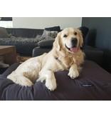 Dog's Companion® Lit pour chien Anthracite