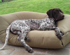 Lits pour chiens polyester / coton
