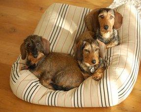Lits pour chiens rayé