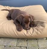 Dog's Companion® Lit pour chien khaki (coating) Medium