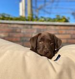 Dog's Companion® Lit pour chien Beige