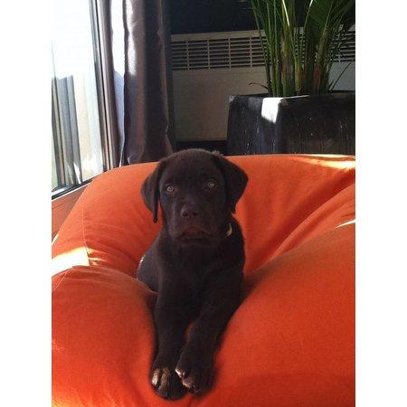 Dog's Companion® Lit pour chien Orange Superlarge