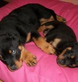 Dog's Companion® Lit pour chien Rose Medium