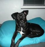Dog's Companion® Lit pour chien Aqua bleu Small