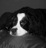 Dog's Companion® Lit pour chien Noir (coating) Small