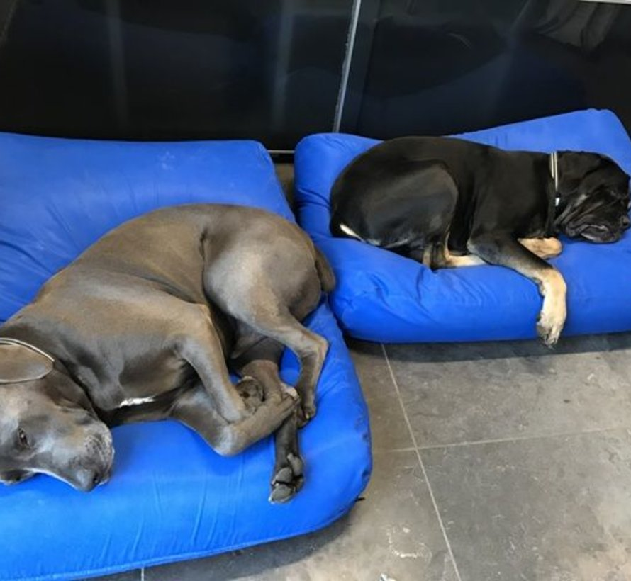 Dog bed Cobalt Blue (coating)