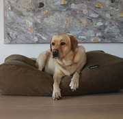 Dog's Companion Dog bed Oxford (Corduroy) Extra Small