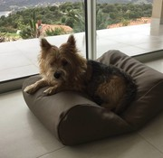 Dog's Companion Lit pour chien taupe leather look Small