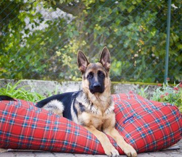 Dog's Companion Hondenbed Royal Stewart