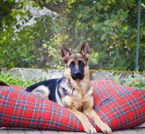 Dog's Companion Dog bed  Royal Stewart Extra Small