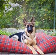 Dog's Companion Dog bed Royal Stewart Superlarge
