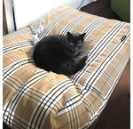 Kattenkussens