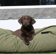 Dog's Companion Hondenbed Olijf groen  vuilafstotende coating