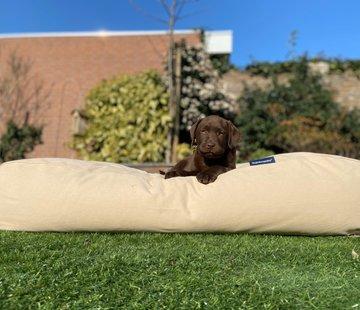 Dog's Companion Lit pour chien Beige Superlarge