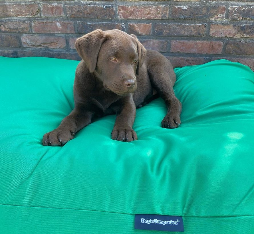 Dog bed spring green (coating) Small