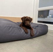 Dog's Companion Hondenbed Charcoal coating Superlarge