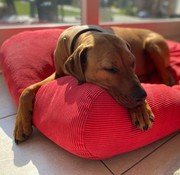 Dog's Companion Hundebett Rot (Cord) Superlarge
