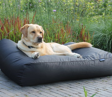 Dog's Companion Dog bed Black (coating) Medium