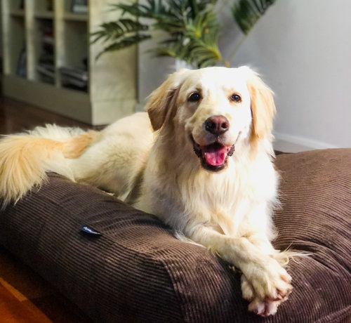 Dog's Companion Hondenbed Chocolade Bruin Ribcord Medium