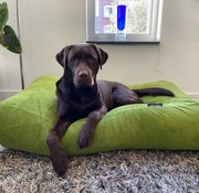 Dog's Companion Hondenbed Appelgroen Ribcord Medium