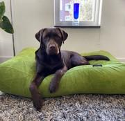 Dog's Companion Hondenbed Appelgroen Ribcord Superlarge