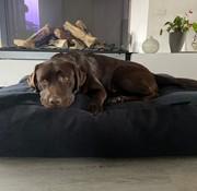 Dog's Companion Pre order! Lit pour chien Dark Steel Bouclé