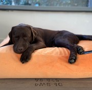 Dog's Companion Lit pour chien Peach velours