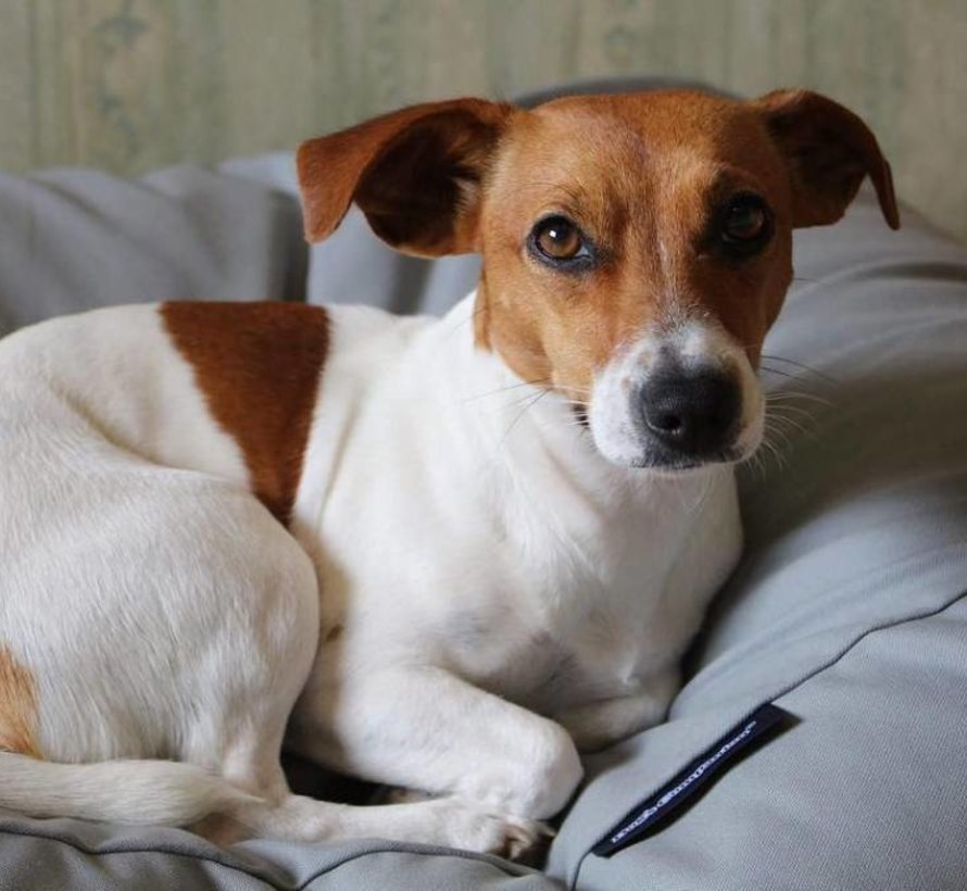 Dog bed Light grey Superlarge