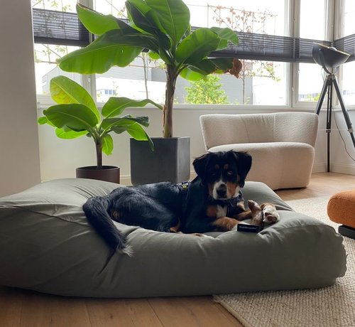 Dog's Companion Lit pour chien Basalte Large