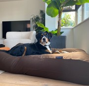 Dog's Companion Hondenbed Chocolade bruin Medium