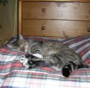Dog's Companion Cat bed dress stewart