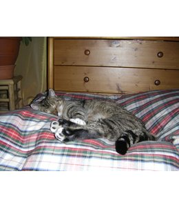 Dog's Companion Cat bed dress stewart