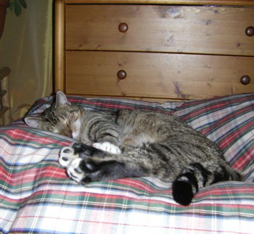 Coussin pour chat dress stewart