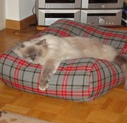 Dog's Companion Cat bed scottish grey